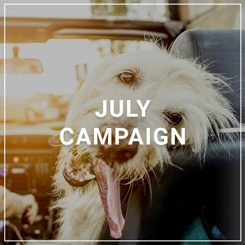 July 2018 Campaign